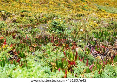 Succulents landscape on a mountain hill - stock photo