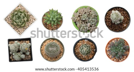Succulents or cactus in pot isolated on white background, overhead or top view. - stock photo