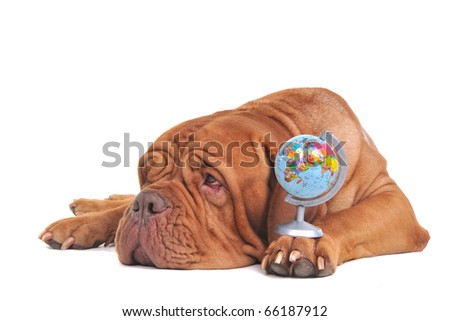 Such a small world we live in! Dog with globe - stock photo