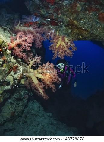 SUDAN, Red Sea, Sha'ab Swadi, U.W. photo, Toyotas wreck, Alcyonarians (soft corals) - - stock photo