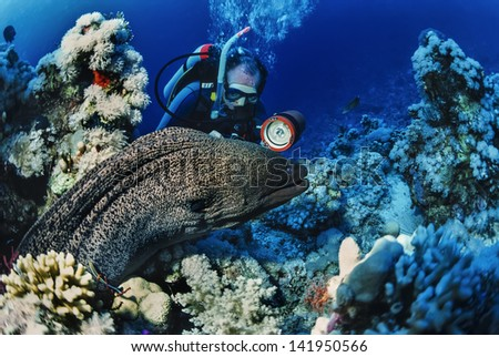 SUDAN, Red Sea, U.W. photo, tropical moray eel  and scuba diver - FILM SCAN - stock photo
