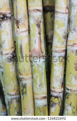 Sugar cane - stock photo
