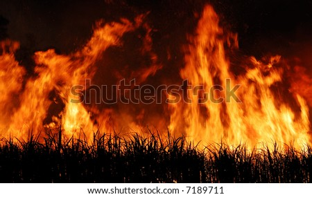 Sugar cane fire 2 - stock photo