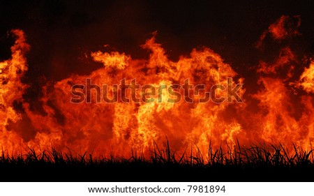 Sugar cane fire 3 - stock photo
