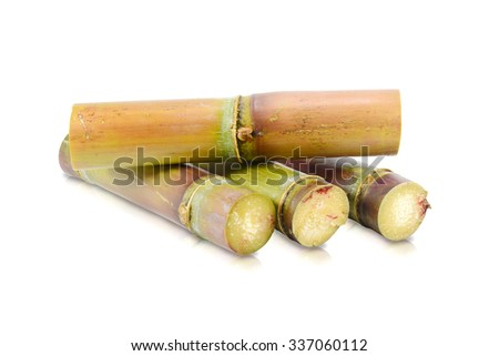 Sugar cane  on the white background