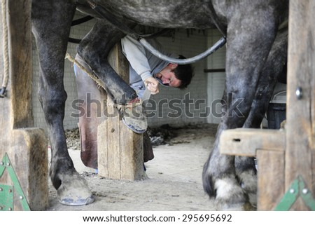 SUGAR CREEK, OHIO - MAY 20, 2015:  An unidentified farrier filing a horse's hoof before shoeing.  Focus on farrier. - stock photo