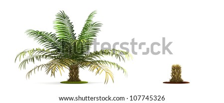 Sugar Palm Tree. High resolution image isolated on white. More trees are available on our portfolio.