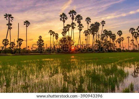 Sugar palm trees on colorful sun set - stock photo