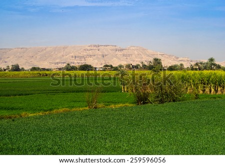 Sugarcane plantation on the bank of the Nile in Egypt. Agricultural landscape with green fields, mountains and palms. - stock photo