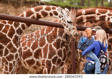 SUGARCREEK, OH - MAY 19, 2015:  A young family feeding giraffes at an exotic animal farm. - stock photo