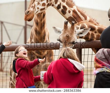SUGARCREEK, OH - MAY 19, 2015:  Young girl enjoying feeding the giraffes at an exotic animal farm. - stock photo