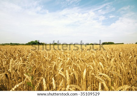 summer agriculture hay field in the middle of the day with some clouds - stock photo