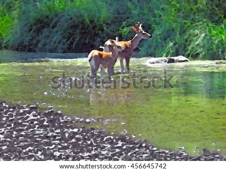 Summer artistic rendering of two young deer, a buck and a doe, standing in shallow river water