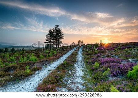 Summer at Stoborough Heath, a large area of sandy heathland near Wareham in Dorset - stock photo