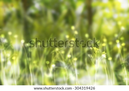 Summer background. Flowers and plants background. Sunny day background. Nature abstract background. Defocused background. Nature beauty. Nature landscape. Field of flowers. Green yellow bright colors. - stock photo