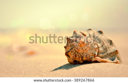 Summer background in vintage colors - seashell on the beach closeup. Seashell on sandy beach, soft light effect and blurred background with bokeh. - stock photo