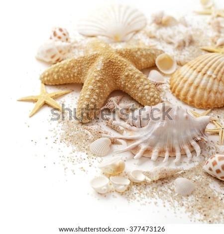 summer background. seashells on white background - stock photo