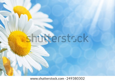 Summer background with colorful daisies against the sky - stock photo