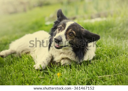 Summer background with cute dog sitting in grass