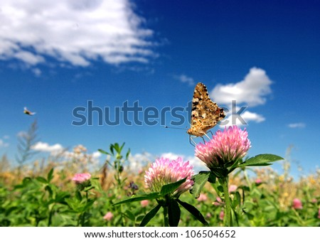 summer backgrounds with beauty butterfly and sunlight - stock photo