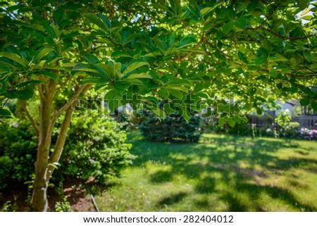 Summer backyard - stock photo