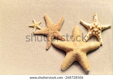Summer beach. Family of starfish on the sand.