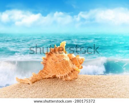 Summer beach. Seashell on the sand. - stock photo