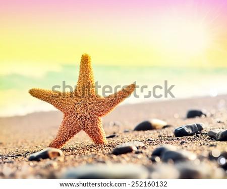 Summer. Beach. Starfish. - stock photo