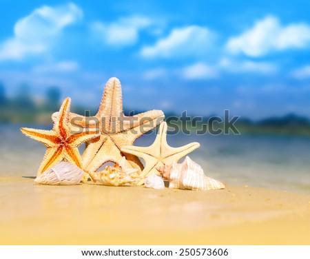 Summer beach. Starfish and shells on the seashore. - stock photo