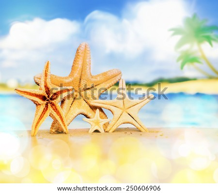 Summer beach. Starfish family on the seashore
