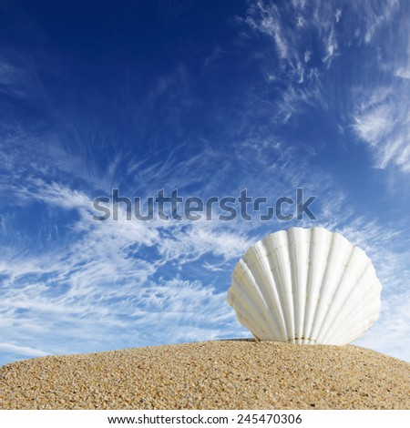Summer beach with sea shells and blue sky - stock photo