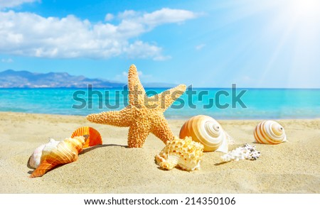 Summer beach with starfish and shells. background sea - stock photo