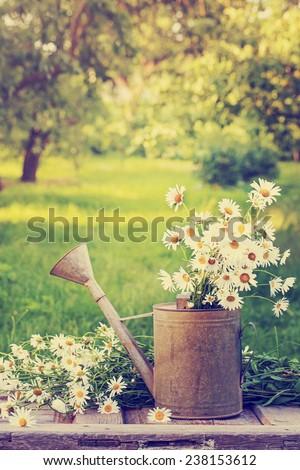 Summer beautiful garden with daisy flowers - stock photo