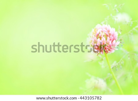 Summer blossoming clover background, selective focus