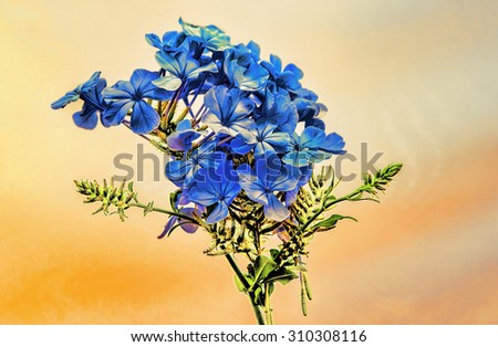 Summer blue flowers in the grunge style against a yellow background. Illustration in Photoshop program. - stock photo