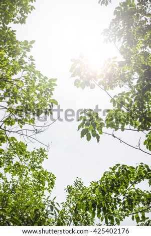 Summer branch with fresh green leaves.Green Energy. - stock photo