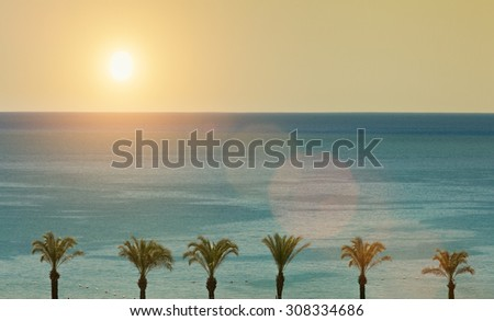 Summer concept with palm trees, sea and sun - stock photo