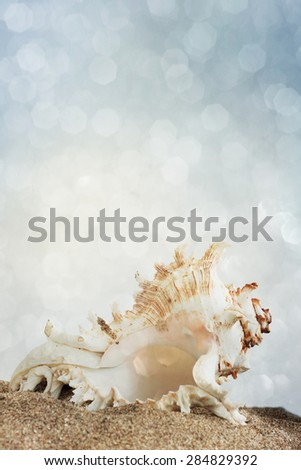 Summer concept with sandy beach, shells  - stock photo