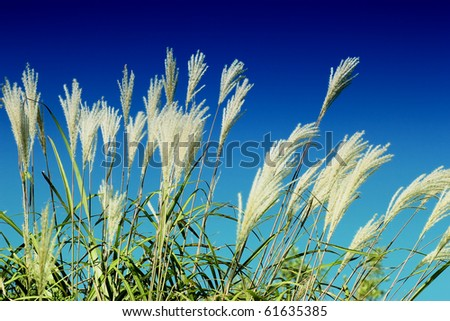 summer crops field against sunny blue sky without clouds. - stock photo