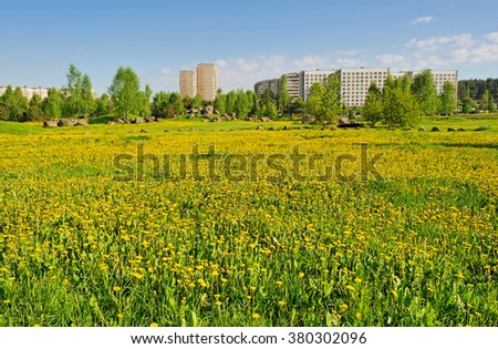 summer dandelions in the town - stock photo