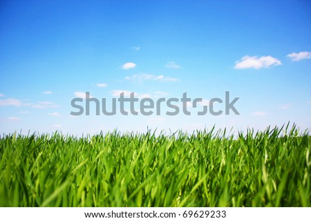summer day - stock photo