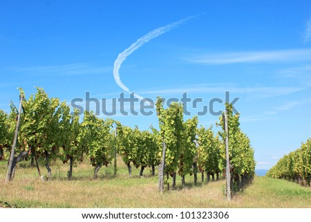 Summer day in a vineyard in Alsace, France - stock photo