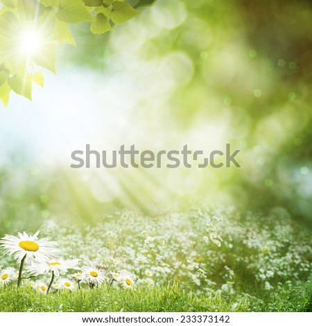 Summer day on the meadow, environmental backgrounds with daisy flowers - stock photo