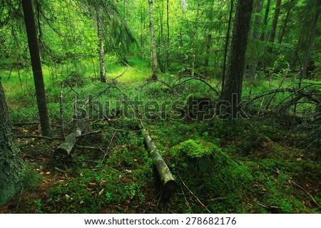 Summer dense forest landscape - stock photo
