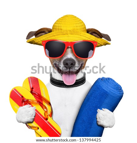 summer dog with towel and flip flops