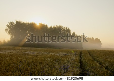 summer early morning with mist and sun
