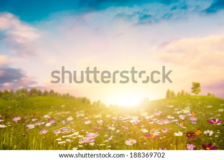 Summer evening on the meadow. Abstract environmental backgrounds - stock photo
