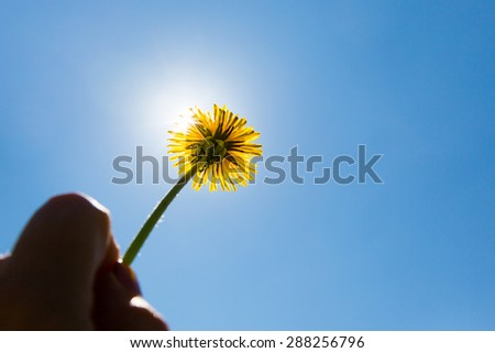 summer feeling with dandelion - stock photo