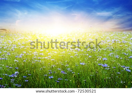 Summer field and colorful sky with sun. - stock photo