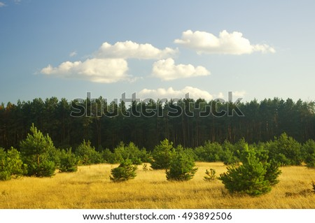 summer field and forest on sunset